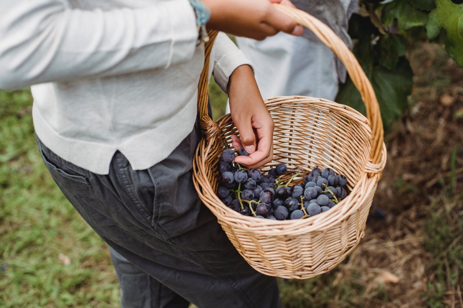 anonymous ethnic woman carrying basket with grapes